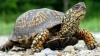 Rare tortoises SET FREE into Nistru's waters. Zoo gets deer, owl babies