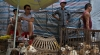 Animal rights advocates get angry as China dog-eating festival nears