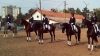 Over 30 professionals and amateurs of horse riding raced in a competition