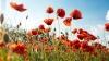 Police find forbidden plants in garden near Chisinau (VIDEO)