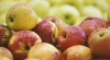 43 Moldovan companies ALLOWED to sell apples in Russia