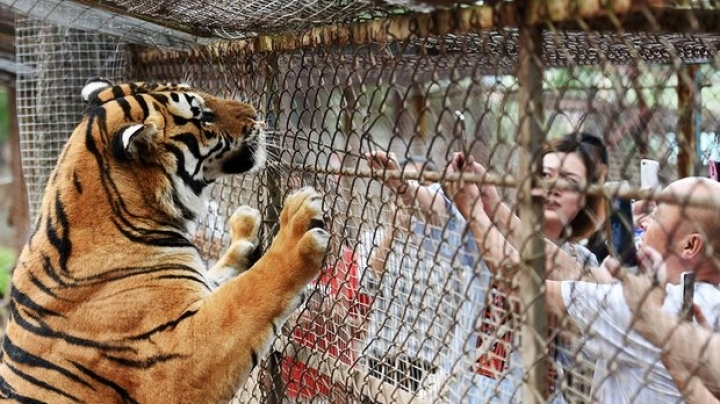 Tiger mauls one woman to death, severely injures another at Beijing Park