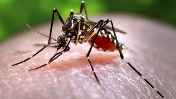 Spain registers first case of baby born with Zika-related defect