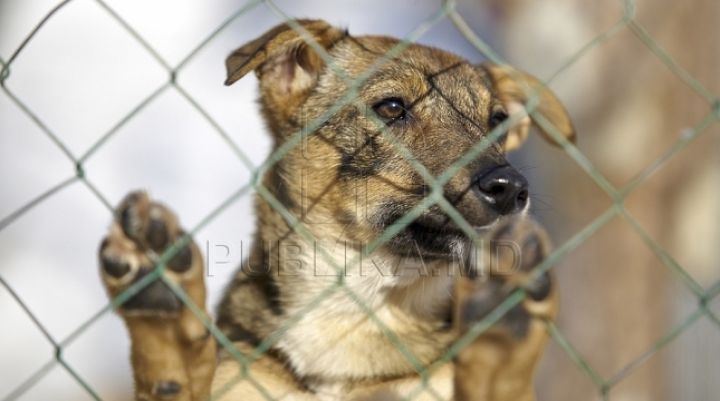 Moldova to enact more severe fines for mistreating or holding animals in poor conditions