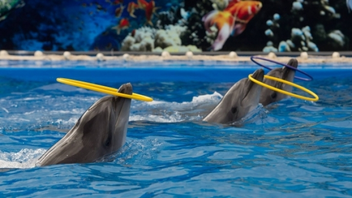 Dolphins create unforgettable moments for orphan children (VIDEO)