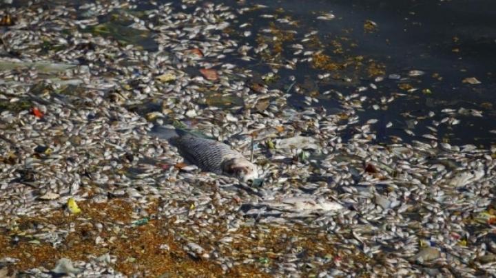 Environmental disaster in Călăraşi: Hundreds of dead fishes fill pond