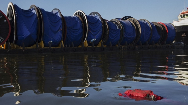 Rio 2016: Bloated CORPSE floats in bay where Olympics will compete