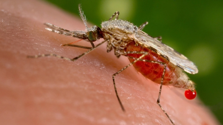 Second case of Zika infection in Romania