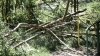 Tree falls and injures 2 in Chisinau