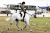 A single mutation made horse riding easier