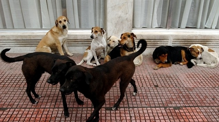 A woman was EATEN ALIVE by a group of 100 vicious stray dogs in front of her son