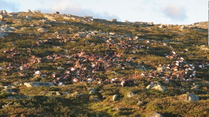 More than 300 reindeer killed by single lightning strike in Norway