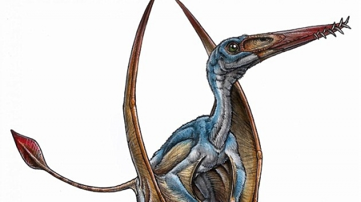 200 million-year-old intact skull of a new species of pterosaur is found in Patagonia
