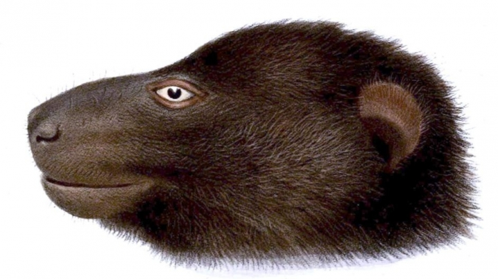 Australian museum close to identifying two new mammals in Solomon Islands