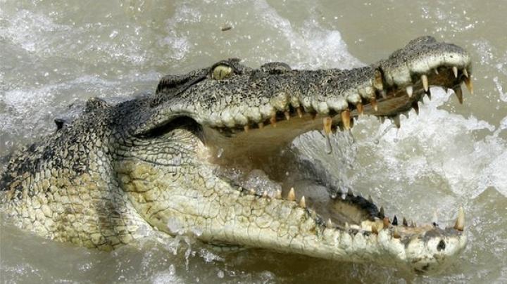 Masked intruders break into a school and dump three saltwater crocodiles