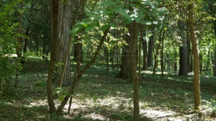 Forest contract lease with no signature or names found by Ministry of Environment