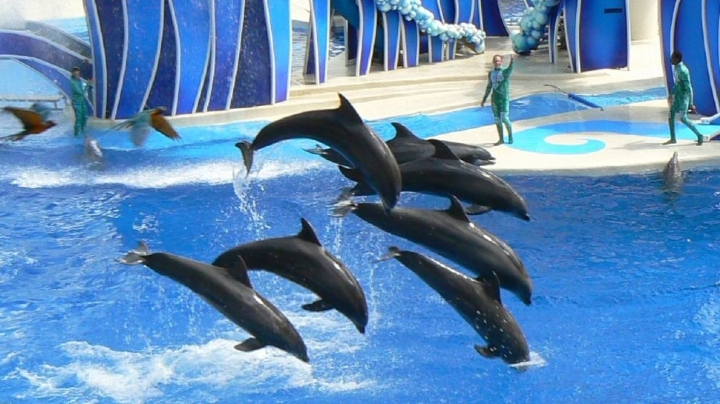 SeaWorld stopped breeding orcas, but what about their other whales?