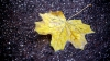 Forecasters issued yellow warning of frost