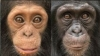 Scientists say that brain experiments on primates are crucial