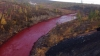 Apocalypse now! Siberian river turns red (PHOTO)