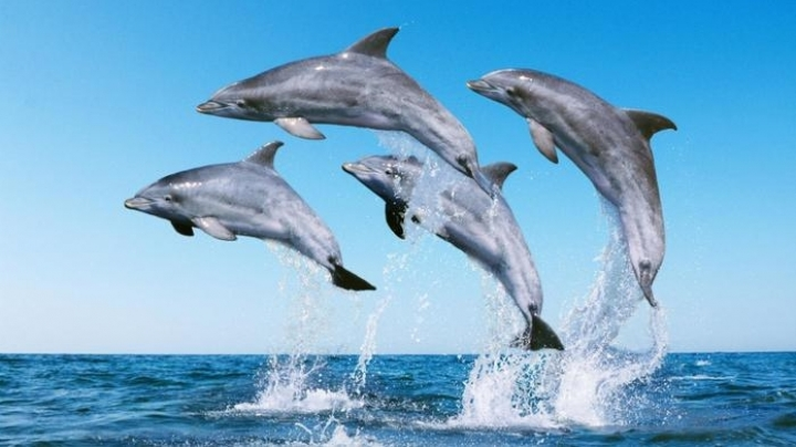 Research: Dolphins speak using 'words'
