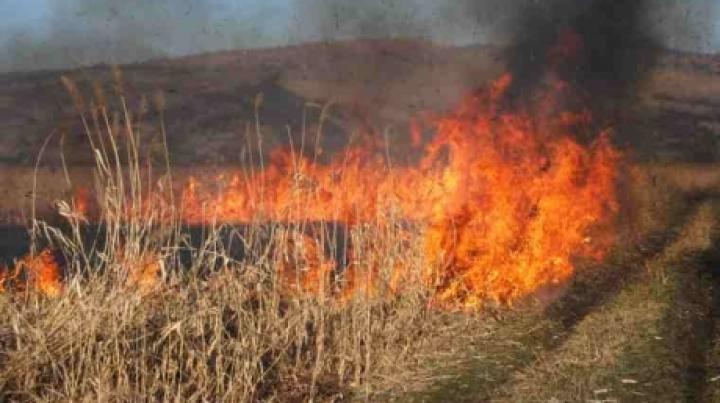 Vegetation fire in Telecentru sector. Fire spread over 10 hectares area