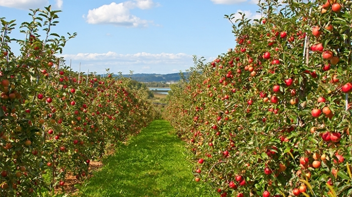Rosselhoznadzor inspects nursery gardens and orchards of Moldova