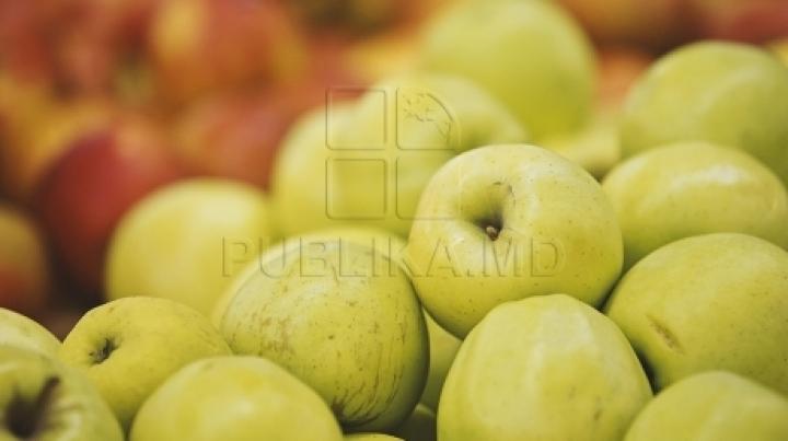 Start of Autumn apple harvest