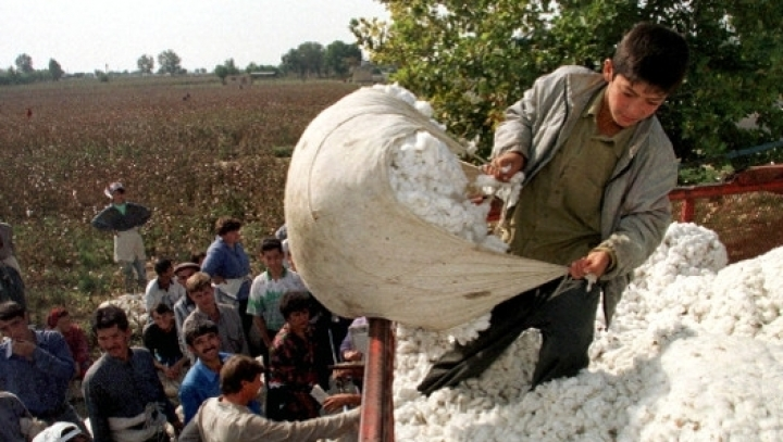 Harvesting cotton as religious duty in Uzbekistan