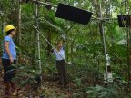 Global warming experiment turns up the heat in Puerto Rican forest