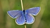 Huge drop in number of butterflies is causing confusion
