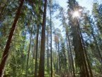 Romania wants to include virgin forests on UNESCO World Heritage list