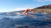 Moldova's performance. Swimmer Ion Lazarenco crossed Molokai strait in 18 hours
