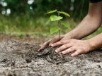 Making Moldova greener! National Tree Planting Day