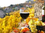 Report: Global wine production falls by 5% due to climate change