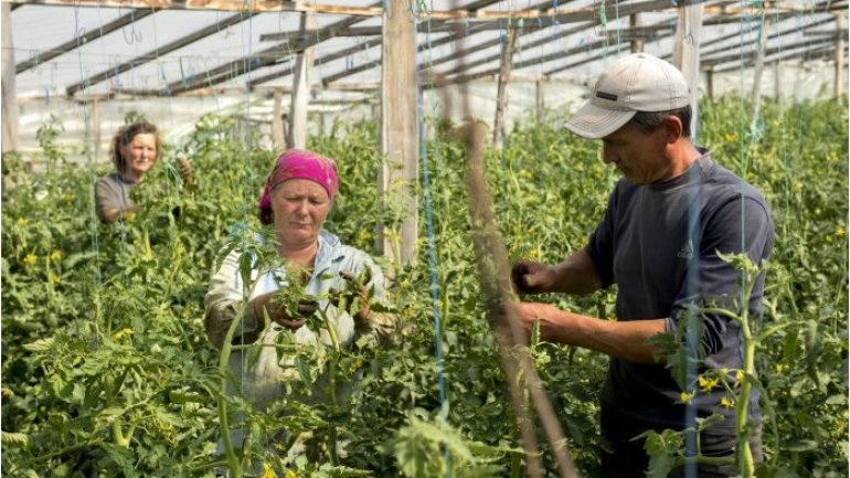 FAO Moldova to implement programme on backing small, medium farmers