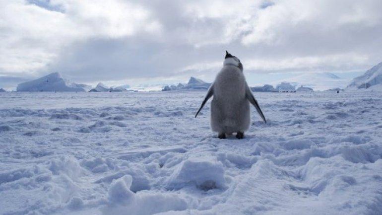 World's largest marine protected area declared in Antarctica