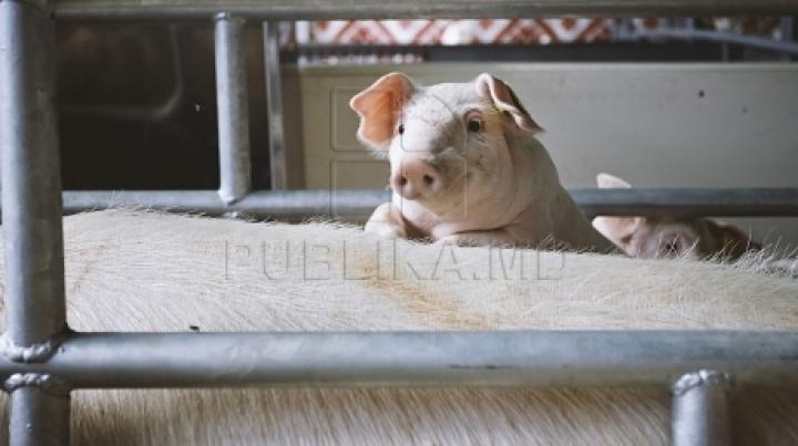 Romania banned pork imports from Moldova