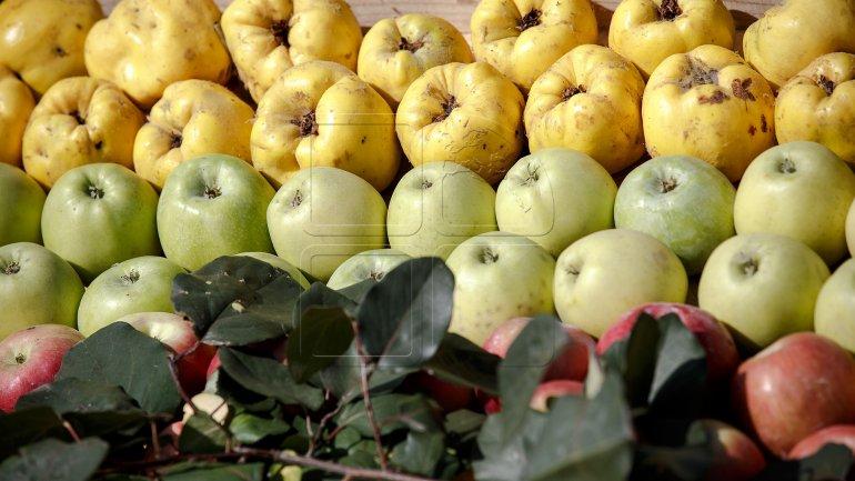 Moldova's produce exports to Russia grow