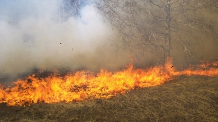 Over 80 hectares of vegetation burned down in last 24 hours in Chisinau
