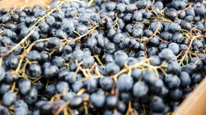 Tragic ending to grapes harvest: Woman dies in hospital