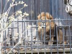 Chisinau Zoo prepares animals for chilly winter (PHOTOREPORT)
