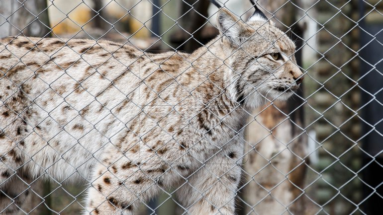 Chisinau Zoo prepares animals for chilly winter (PHOTOREPORT)