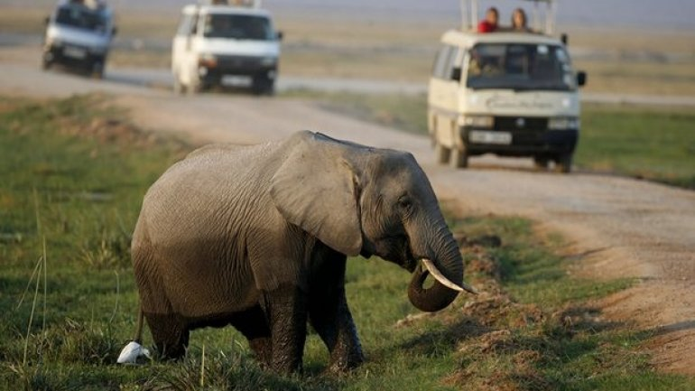 Elephant poaching costing African nations millions in lost tourism revenue