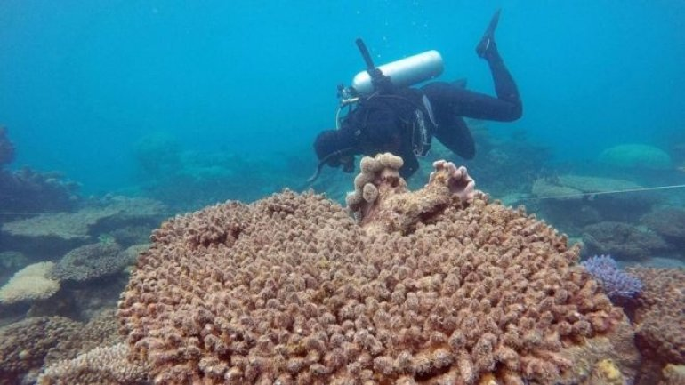 Study: Great Barrier Reef suffered worst bleaching on record in 2016