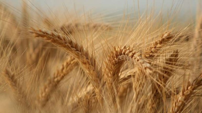 Trade deficit with agri-food products reaches EUR 0.5 bln in Romania