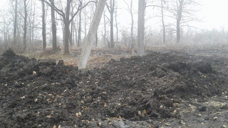 Illegal deforestation carried out by Balti and Falesti groups brings damage of millions