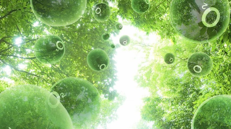 Scientists try to modify plants to produce more food from photosynthesis