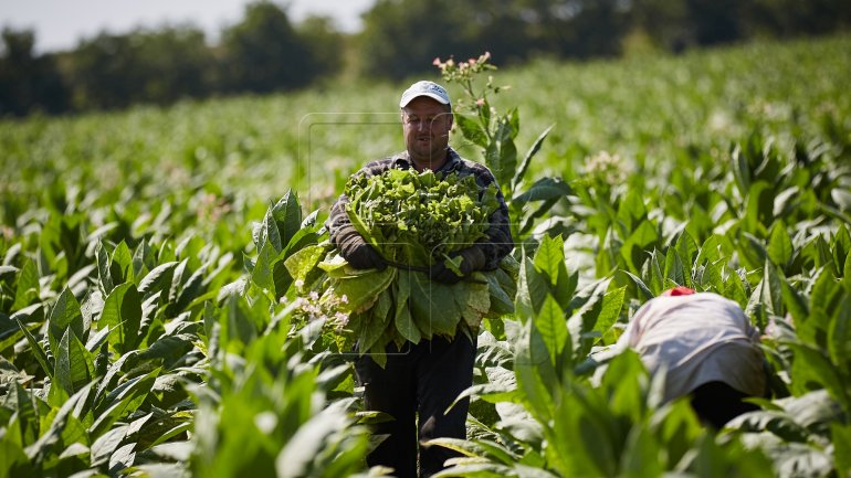 Moldovan farmers get state subventions