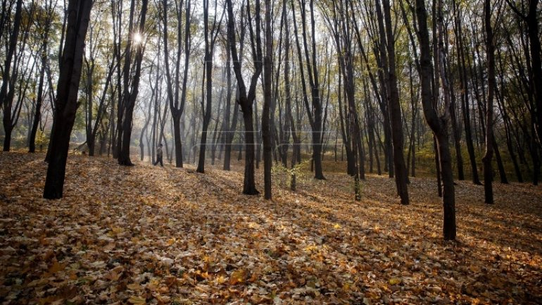 Weather Forecast in Moldova for October 23, 2017